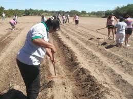 Cultivar la tierra 1